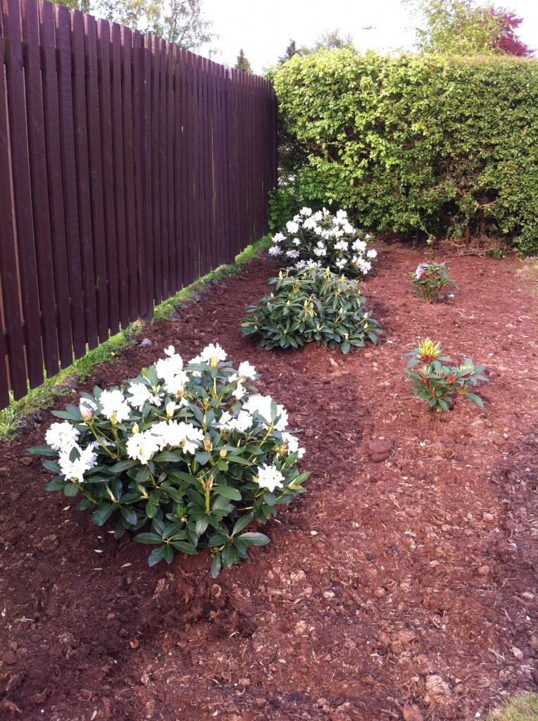 Rhododendronbed